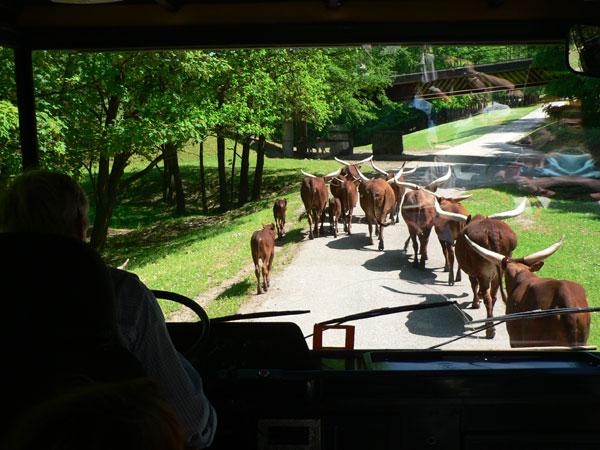 Ubytovací areál Čapkův statek   Zajímavosti v okolí   ZOO Safari Dvůr Králové